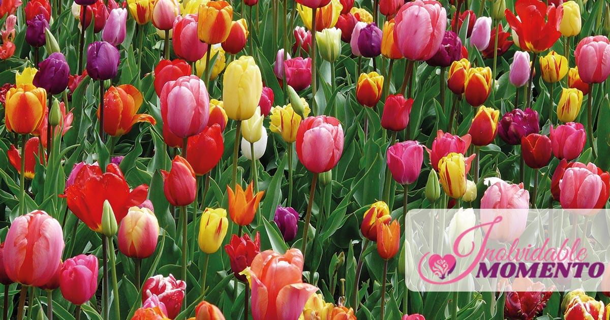 Flores que debes enviar
